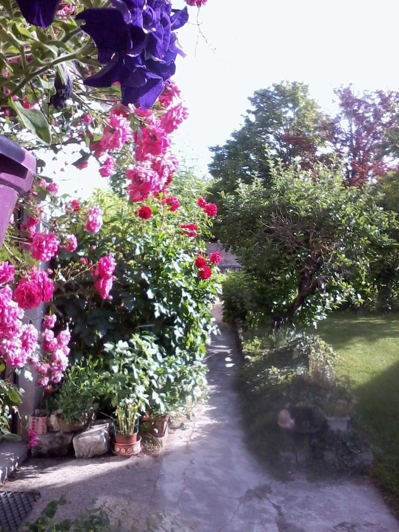 Jardin d\'ornement...une allée agréablement parfumée.
